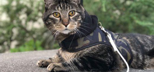 Dimanche avec des onglets la mascotte de blog de chat, de maquillage et de beauté, vol. 511